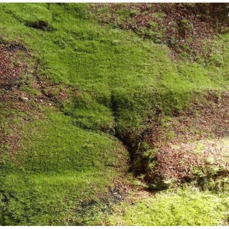 Искусственный мох бугры дизайн 6