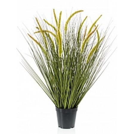 Болотная трава 70 см