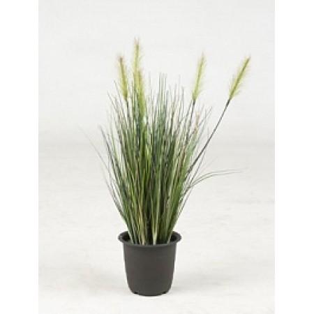 Травяное растение 45 см