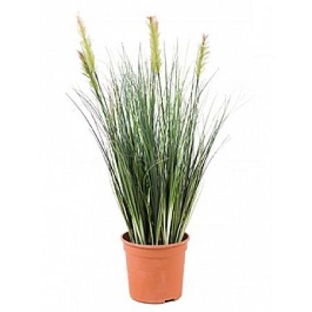 Травяное растение 55 см