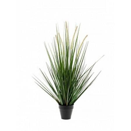 Злаковое растение 90 см