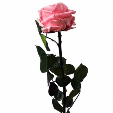 Амороза стандарт навал розовый 3420