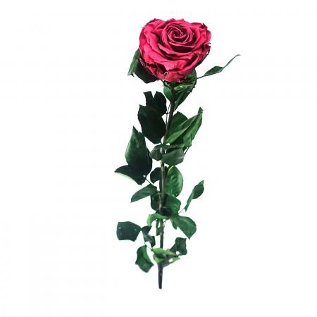 Амороза стандарт навал розовый 3490