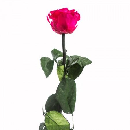 Амороза мини в упаковке розовый 2490