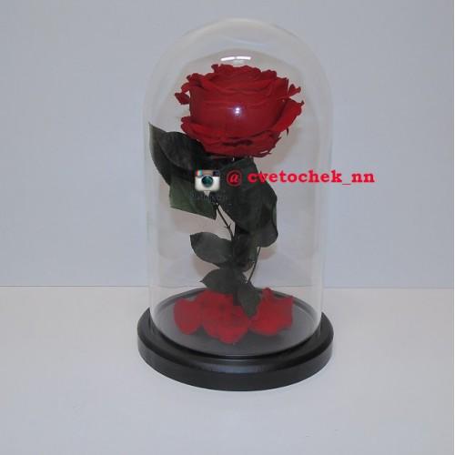Красная роза в стеклянной колбе королевская