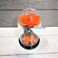 Оранжевая роза в колбе, премиум