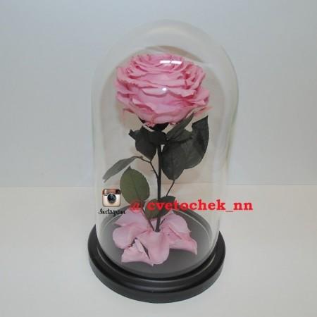 Розовая роза в колбе, премиум