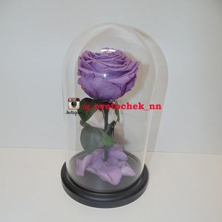 Сиреневая роза в колбе, премиум