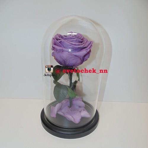 Сиреневая роза в стеклянной колбе королевская
