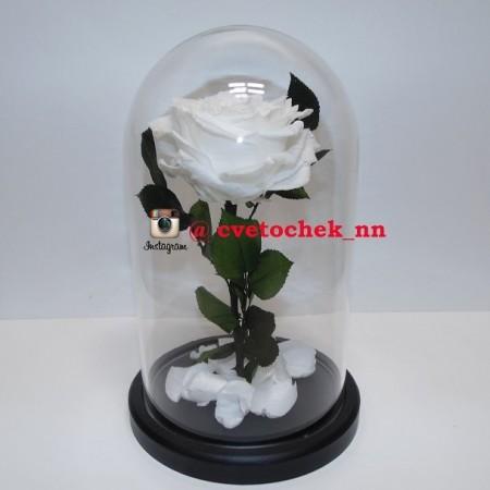Белая роза в стеклянной колбе, бутон 12-14 см.