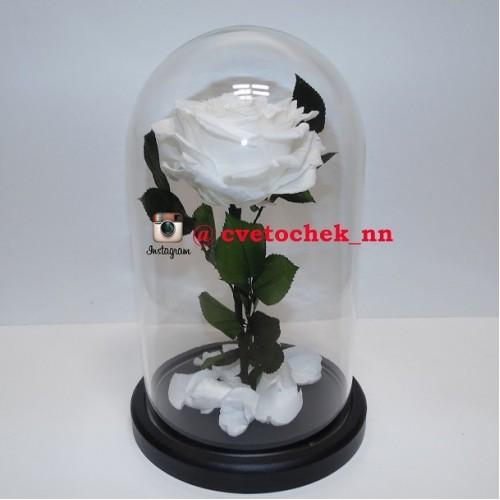 Белая роза в стеклянной колбе королевская