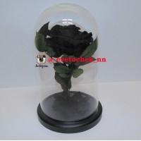Черная роза в колбе королевская