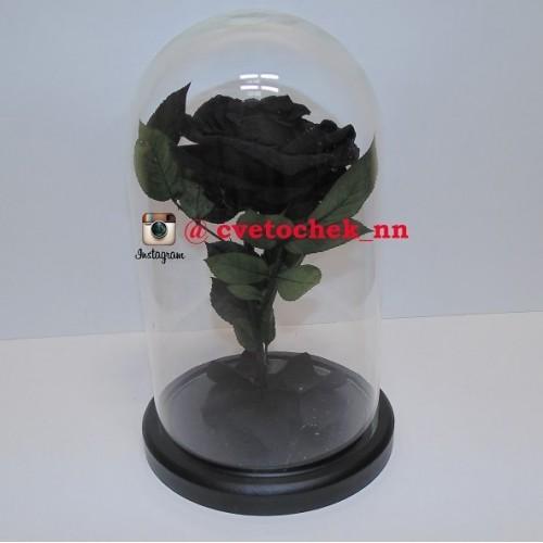 Черная роза в колбе, премиум