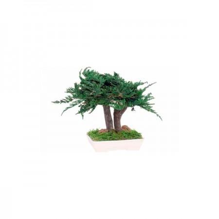Дерево Бонсай Туя зеленый 25 см
