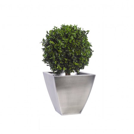Дерево Питоспорум 1 шар 30 зеленый 50 см
