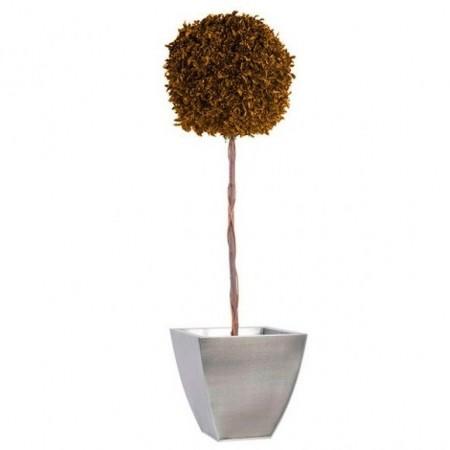 Дерево Питоспорум 1 шар на стволе желтый 100 см