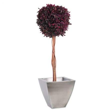 Дерево Питоспорум 1 шар на стволе красный 100 см