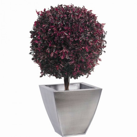 Дерево Питоспорум 1 шар 30 красный 40 см