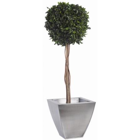 Дерево Питоспорум 1 шар на стволе зеленый 100 см