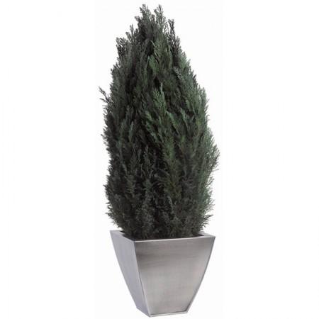 Дерево Туя Элвуди зеленый 60 см