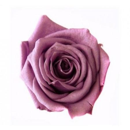 Роза медеа навал лиловый 0830