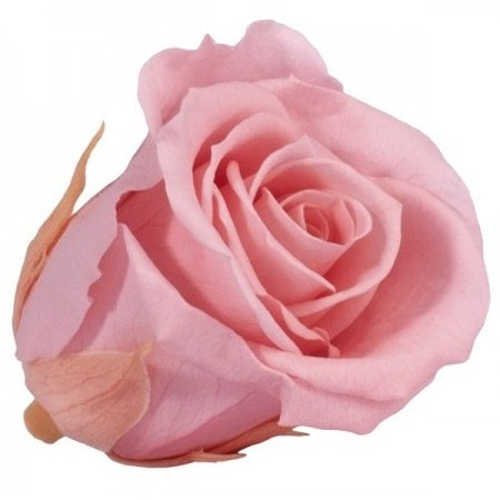 Роза медеа навал винтажный розовый 0450
