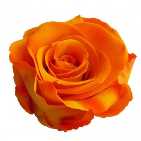 Роза медеа навал оранжевый 0530