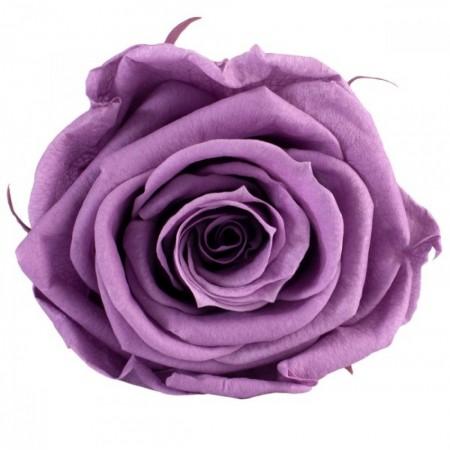 Роза стандарт навал фиолетовый 0830