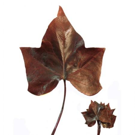 Плющ листья бордовый