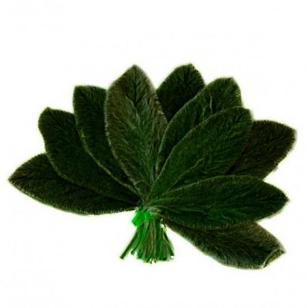 Заячьи уши листья зеленый