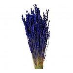 Стабилизированные цветущие растения и травы