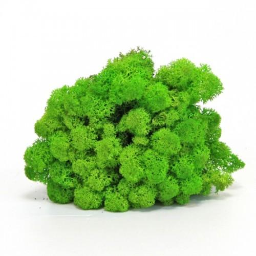 Мох ягель зеленая трава в упаковке для декора