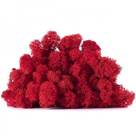 Мох ягель красный в упаковке для декора