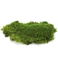 Мох Плоский зеленый 0,5 кг