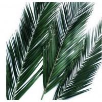 Феникс лист 40/60 зеленый