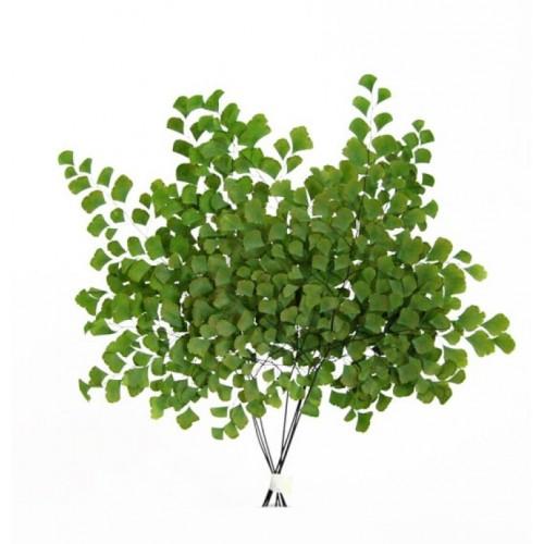 Папоротник Адиантум зеленый