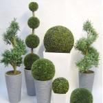 Стабилизированные растения, мох и цветы