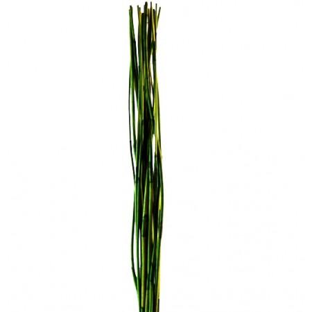 Элефант Рид светло зеленый