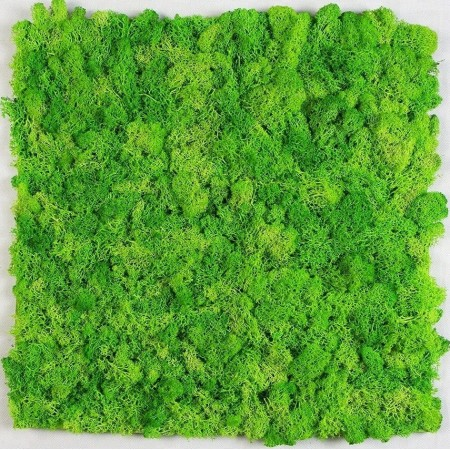 Озеленение эко-панелями из мха
