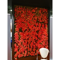 Фотозона из растений в аренду