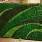 Озеленение мхом ягель