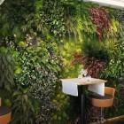 Озеленение стабилизированными растениями и мхом