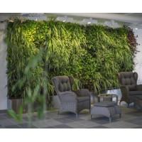 Озеленение живыми растениями с системой автополива